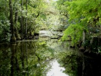 Short Guide to Visiting Everglades National Park