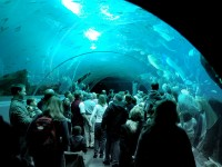 Top 5 Aquariums in the US